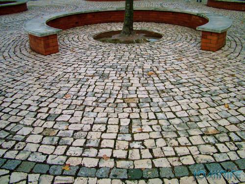 Banco circular de jardim em torno de uma árvore