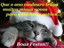 Feliz Natal Desejam Os Meus Animais Eu Gosto De Animais