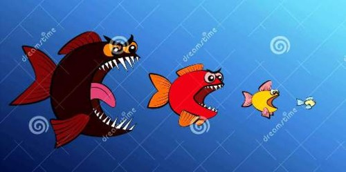 o-peixe-grande-come-cadeia-alimentar-menor-de-peix