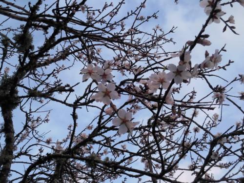 Epifania  Primavera 2015. Original DAPL. jpg