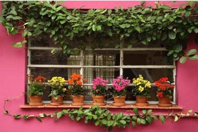 blog flores na janela.jpg