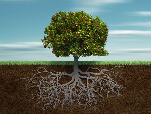 as-raizes-permitem-fixacao-no-substrato-bem-como-a