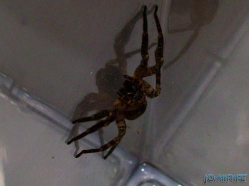 Aranha (2)