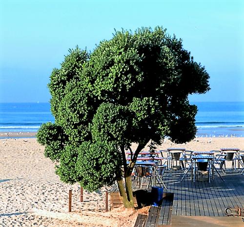Doellinger Fafe Praia
