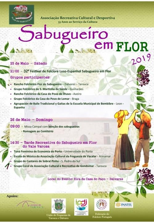 Sabugueiro em Flor 2019