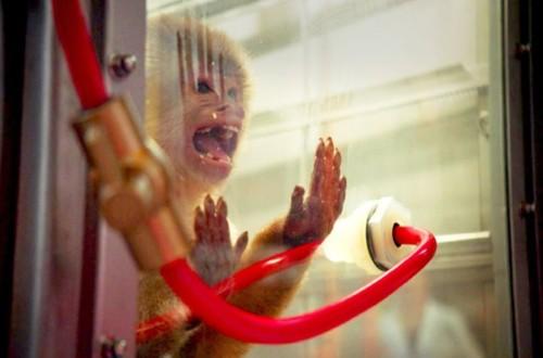 macacos_emissoes_net8286c7ea.jpg