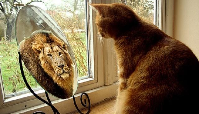 Gato-em-frente-ao-espelho-enxergando-se-como-Leão