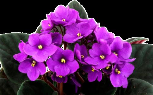 180621_violeta.png