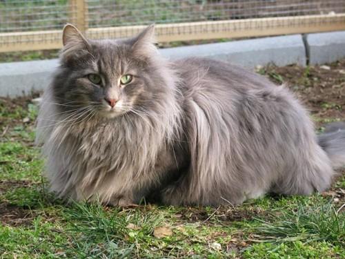 com-gato-selvagem-bosque-noruega.jpg