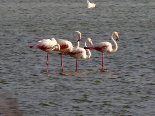 lagoa salgados f.encarnaçao.jpg
