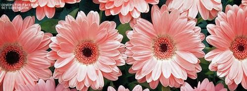 Pink-flower-facebook-cover.jpg