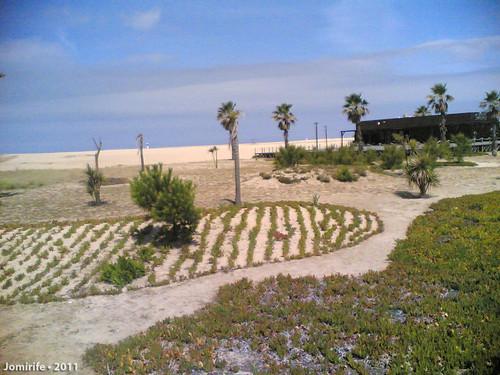 Oásis na praia da Claridade - Vegetação e Bar