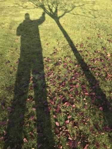 shadow-man-shaking-tree-green-grass-some-autumn-fo