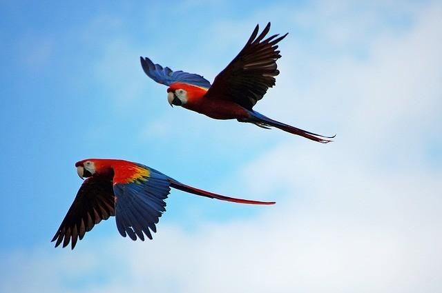 parrots-1612070_640.jpg