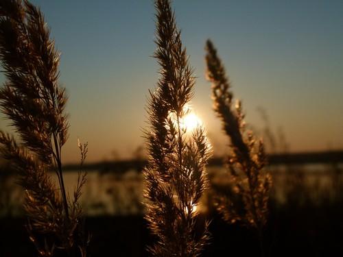 sunset-193304_960_720 2.jpg
