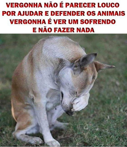 vergonha é ver animais a sofrer e não fazer nada