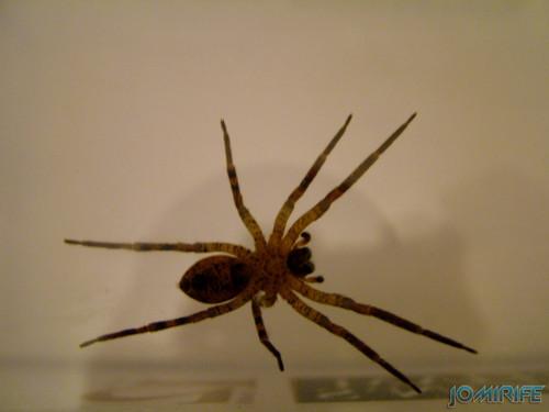 Aranha (3)