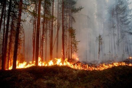 20-arctic-circle-fire-sweden.w710.h473.jpg