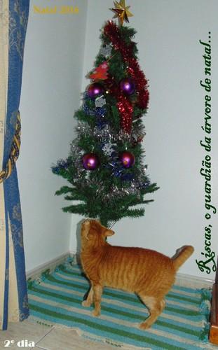 gatosearvoresnatal.JPG