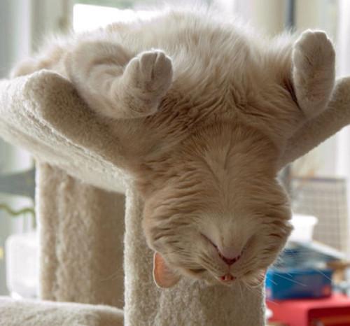 gato dorme.jpg