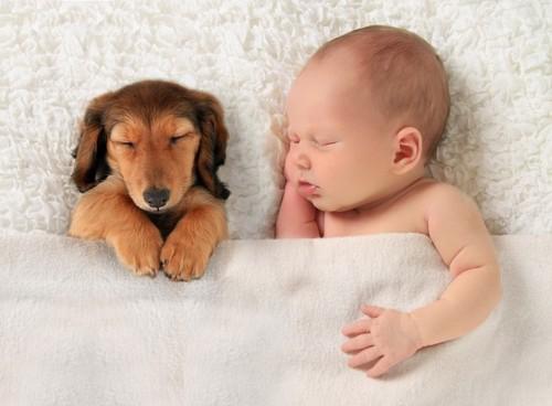 Imagem bebe e cão.jpg