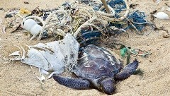 Pollution-Ocean-Beach-Garbage-Dead-Turtle.jpg