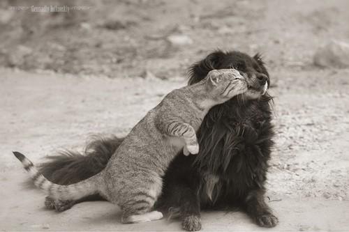 caes-gatos-melhores-amigos-11.jpg