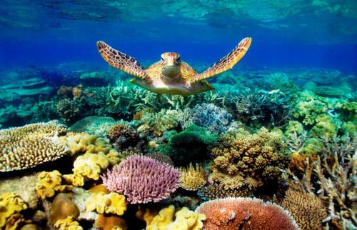 grande-barreira-de-coral.jpg