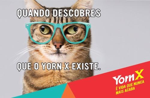 yorn-x.jpg