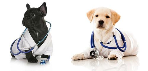 cachorros-blog.jpg