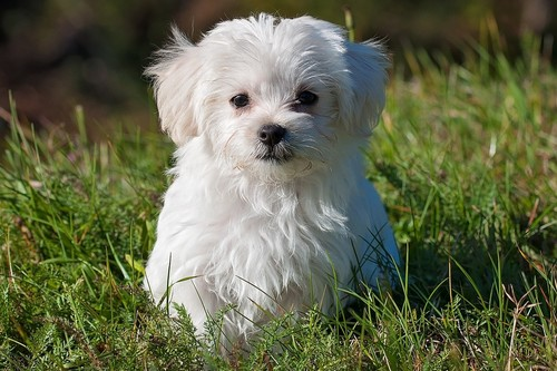 Dog-Petra.jpg