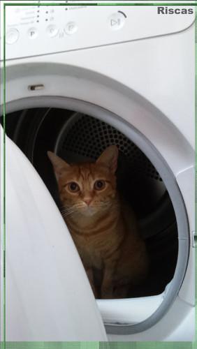 gato-a-secar1.jpg