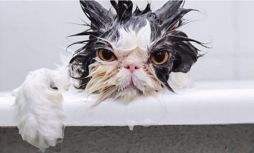 wet-cat.png
