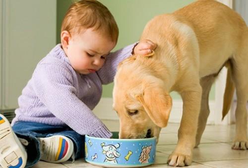 cachorro-e-crianca.jpg