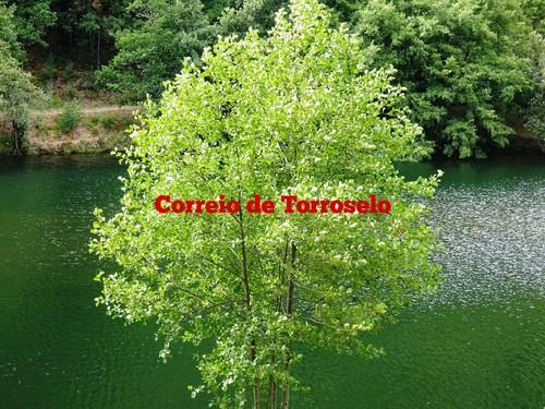 www.escrevernafoto.com.br_exps1.jpg