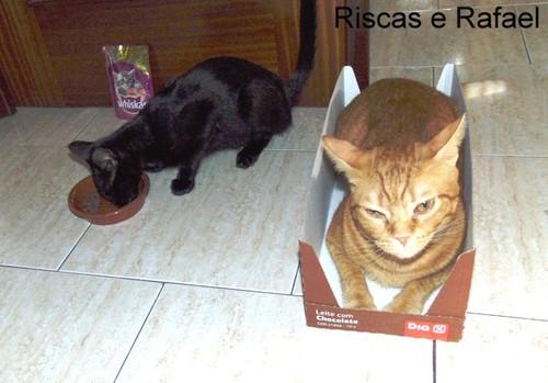 RR2cats.JPG