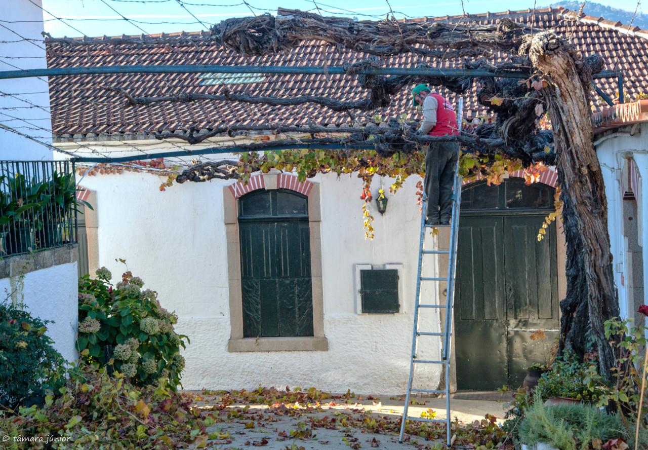 2017.- Pelo Douro no outono II (542).jpg