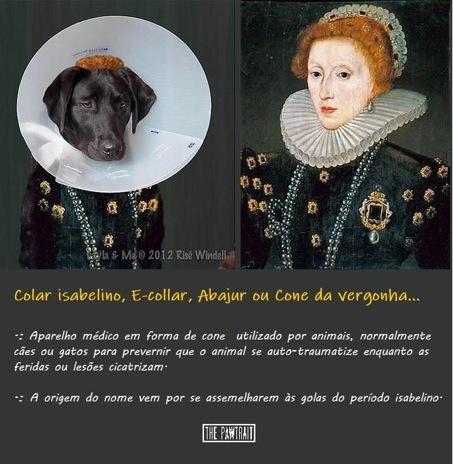 E-collar-photo.jpg