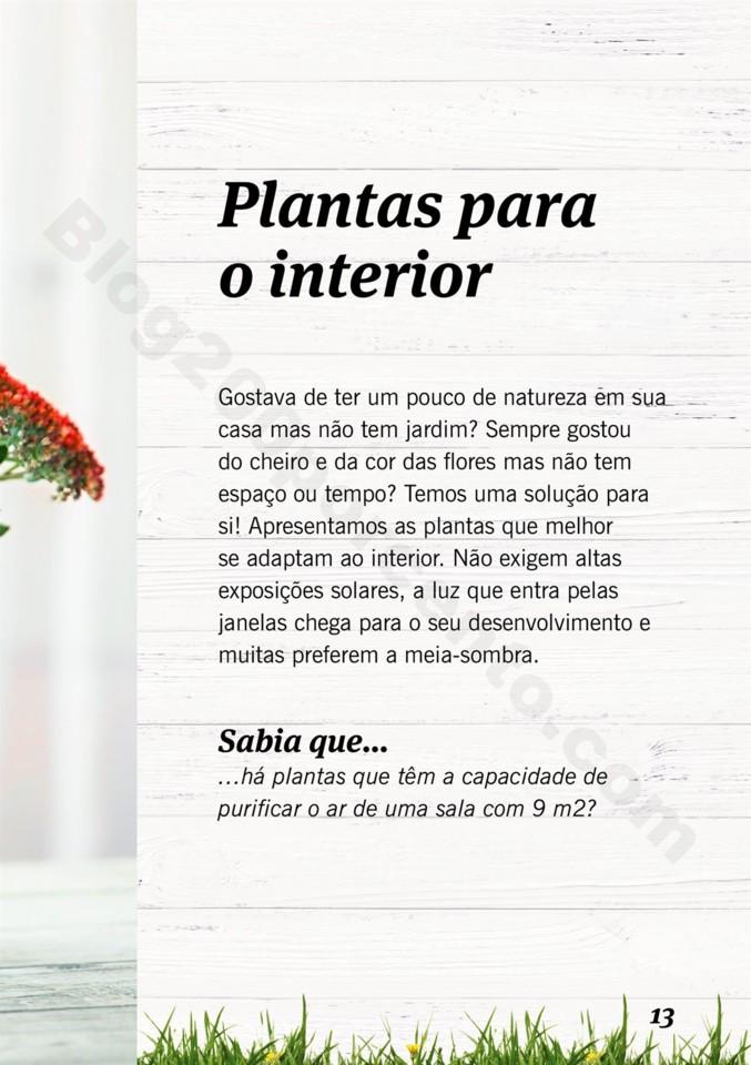 Mercado-de-Plantas-A-partir-de-04.04-01_012.jpg