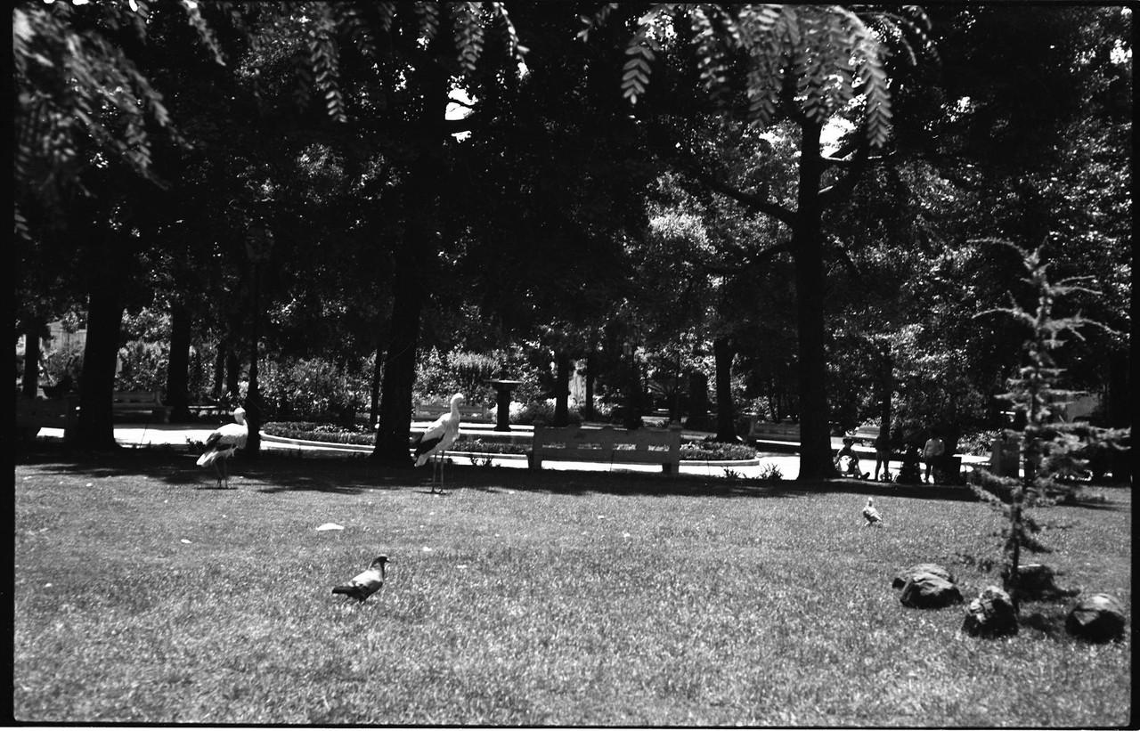 Jardim das Amoreiras, 1967, foto de Artur Inácio