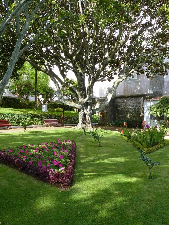 Angra - Jardim Duque da Terceira (46).JPG