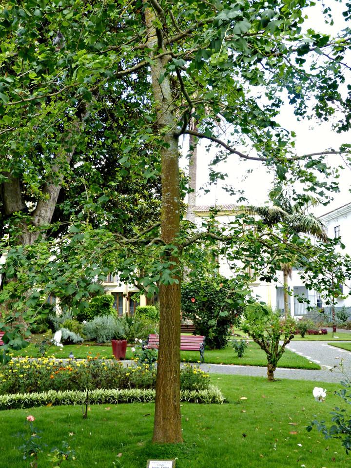 Angra - Jardim Duque da Terceira (38).jpg