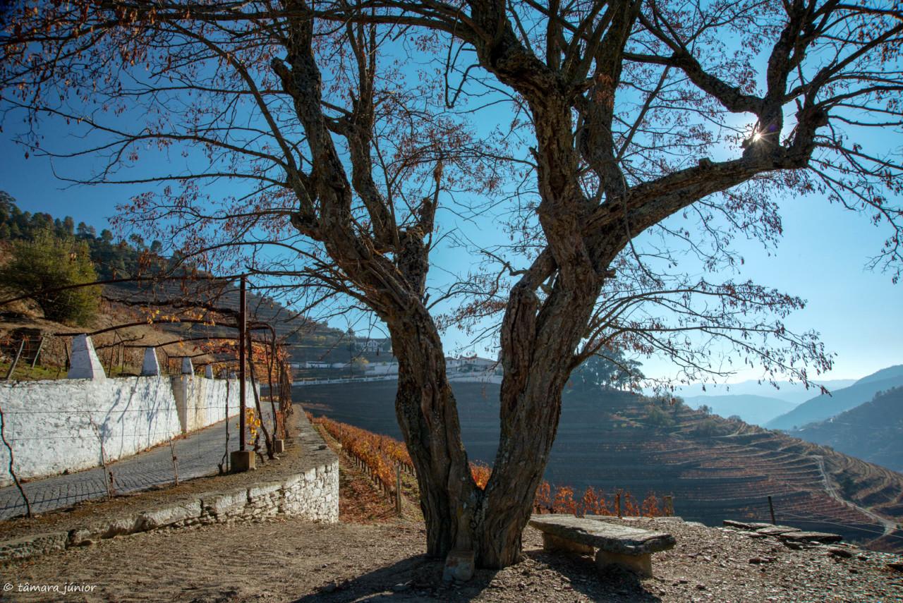 2017.- Pelo Douro no outono II (489).jpg