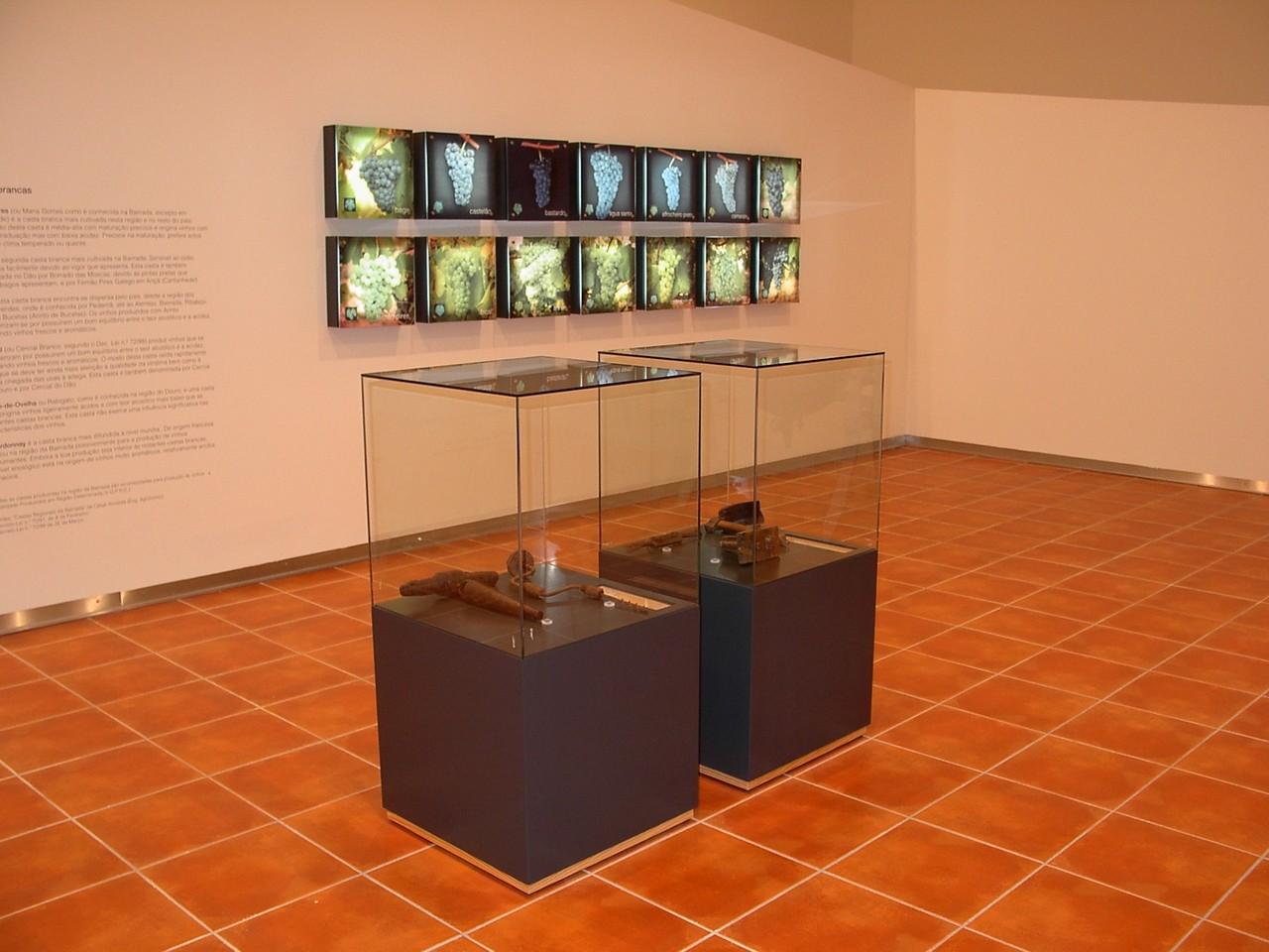 museu-vinho-bairrada-anadia.JPG