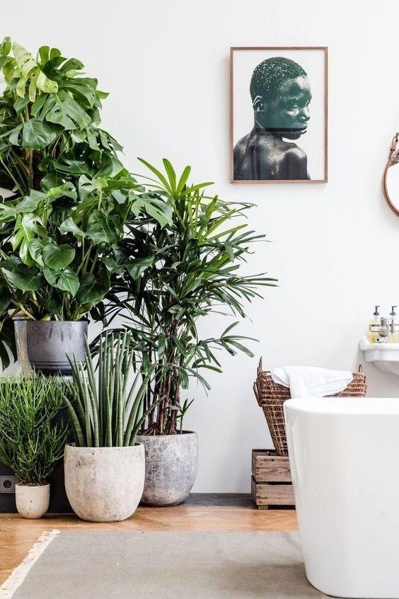 Refresque o design da sua casa com uma decoração verde (Imagem: http://www.airows.com)