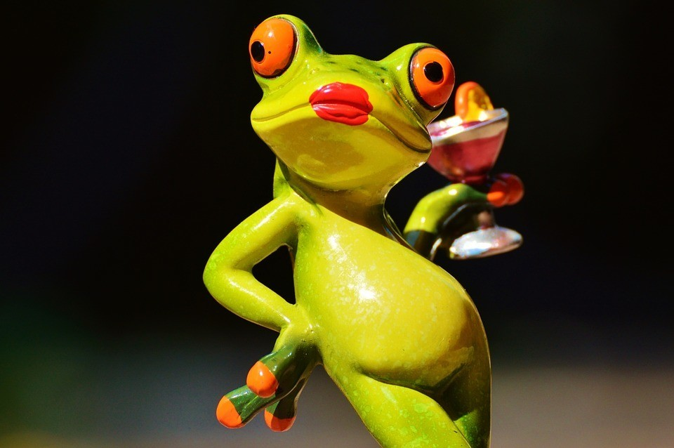 frog-881655_960_720.jpg