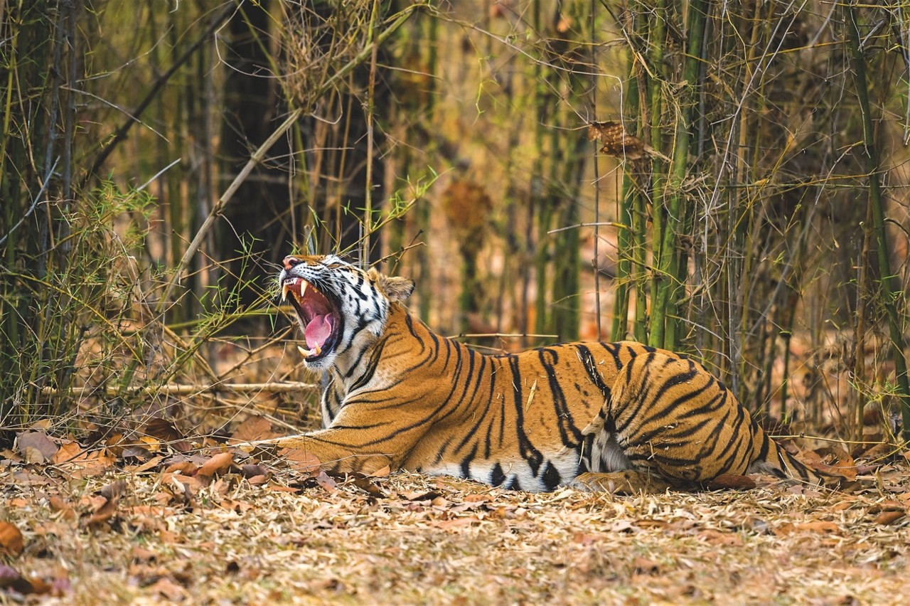 Madhya_Pradesh_India_GettyImages_992039154.jpg