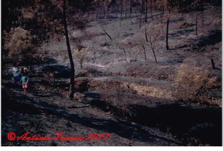 Covão do rossinho ardido.jpg
