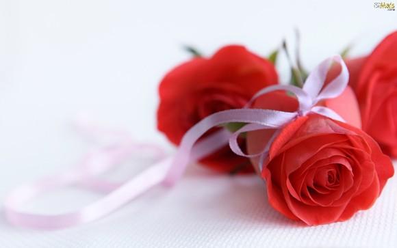 lindas-rosas-vermelhas-wallpaper.jpg