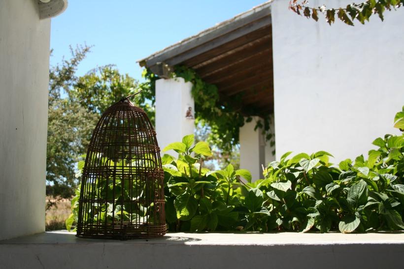 HContadas-birdcage02
